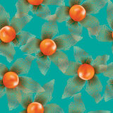 Physalis seamless vector background Stock Photography