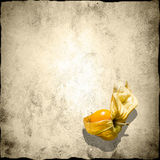 Physalis with shadow Stock Photo