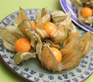 Physalis. Some fresh exotic physalis berries royalty free stock photo