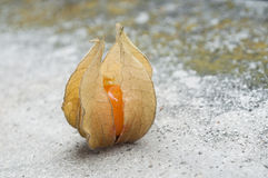 Physalis on stoned background. Closeup  of physalis on stoned background Stock Image