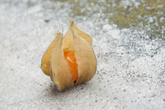 Physalis on stoned background. Closeup  of physalis on stoned background Stock Photo