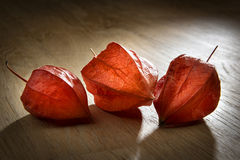 Physalis on table Royalty Free Stock Photography