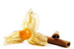 Physalis and two cinnamon sticks Stock Images