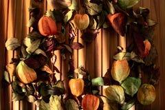 Physalis und trocknen Blätter auf einem hölzernen Hintergrund Stockbilder