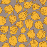 Physalis vector pattern Stock Image