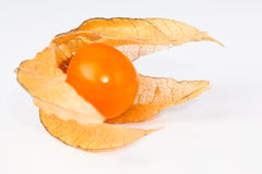 Physalis on white Stock Images