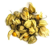 Physalis on white background Stock Photography