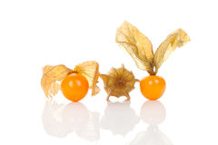 Physalis on white background. Stock Photo