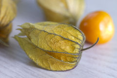 Physalis on a white wood background Stock Image