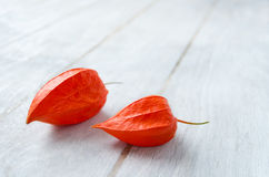 Physalis on a white wooden background. Physalis fruits closeup on a white wooden background Stock Photography