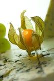 Physalis y queso verde Imagen de archivo