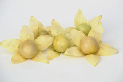 Physalis yellow flowers and fruit Stock Image