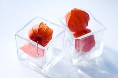Physalisblumen in zwei Gläsern lizenzfreie stockbilder