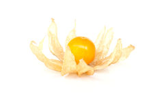 Physalisfrucht (Kapstachelbeere) Lizenzfreies Stockbild