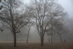 Physical exercise. Exercise in a heavy fog Park Royalty Free Stock Photography