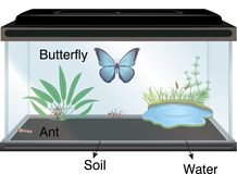 Physics - Aquarium and butterfly stock illustration