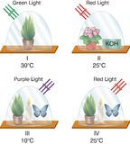 Physik - Glasfanexperimentlaterne vektor abbildung