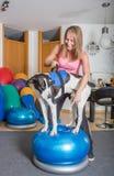 Physiotherapie del cane Fotografie Stock Libere da Diritti