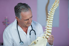 Physiotherapist examining a spine model Royalty Free Stock Photography
