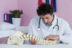 Physiotherapist examining a spine model Stock Image