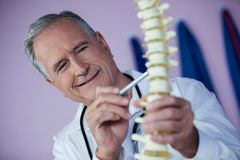Physiotherapist examining a spine model Stock Images