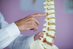 Physiotherapist examining a spine model Stock Photography