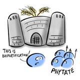 Phytates i pszeniczny biofortification ilustracji