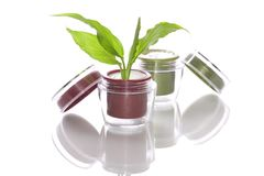 Phyto crème de produits de beauté Photos stock