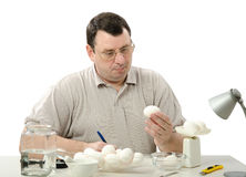 Phytocontrol engineer carefully analyzes eggs Stock Image
