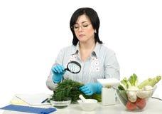 Phytosanitary technician carefully inspecting at a fresh dill Stock Photography