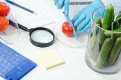 Phytosanitary technician hands cuting tomato Royalty Free Stock Image