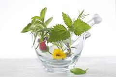 Phytotherapy -药用植物和花在灰浆 库存图片