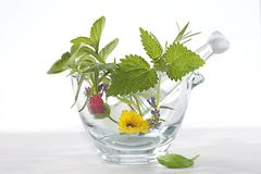Phytotherapy - Medicinal Plants and Flowers in a mortar Stock Images