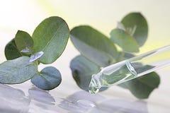 Phytotherapy - nödvändig olja för eukalyptus arkivbilder