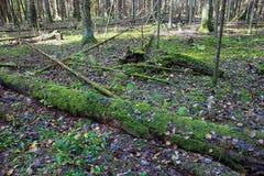 Piękna jesień mieszał las w jesieni w Wrześniu fotografia royalty free