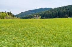 Piękna obszar trawiasty sceneria w Niemcy zdjęcie stock