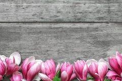 Piękna różowa magnolia kwitnie na nieociosanym drewnianym stole z kopii przestrzenią dla twój teksta Odgórny widok Mieszkanie nie fotografia royalty free