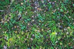Piękna tekstura lasowa podłoga z rożkami i spadać liście w lecie trawy i sosny obrazy stock