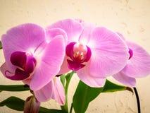 Piękna wiązka Storczykowi kwiaty zdjęcie royalty free