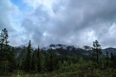 Piękna zimna północna natura: drzewa i skały pod ciężkim chmurnym niebem obrazy royalty free