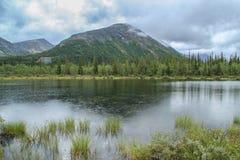 Piękna zimna północna natura: góry, skały, skały i jezioro otaczający, drzewami i mech Khibiny góry w rosjaninie obraz royalty free