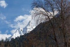 Piękne nakrywać Kaukaskie góry i skłony przerastający z iglastym lasem na pogodnym zima dniu obraz royalty free