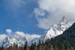 Piękne nakrywać Kaukaskie góry i skłony przerastający z iglastym lasem na pogodnym zima dniu zdjęcia royalty free