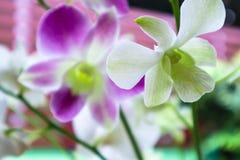 Piękne orchidee z ranku światłem słonecznym obraz stock