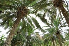 Piękne palmy i odległy widok kurort zdjęcia stock