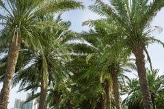 Piękne palmy i odległy widok kurort obrazy stock