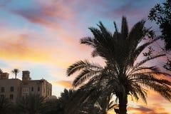 Piękne palmy i odległy widok kurort obrazy royalty free