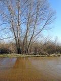 Pięknej wiosny powodzi drzewny pobliski sposób, Lithuania fotografia royalty free