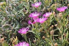 Piękni różowi wildflowers i bumblebee zdjęcia stock