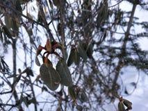 Piękno śnieg i drzewo fotografia stock